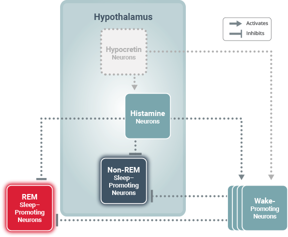 Sleep wake Histamine Circuits
